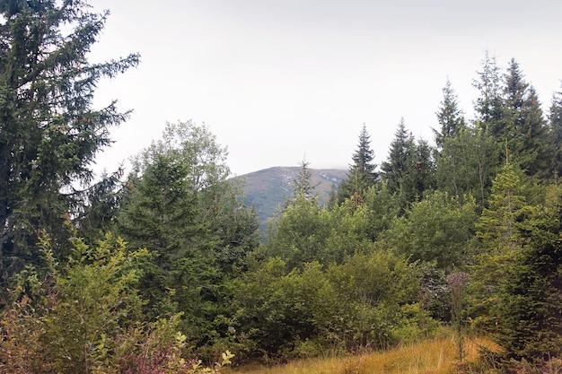 Bos in de bergen mooie hemel
