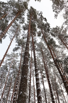 Bos in de ijzige winter