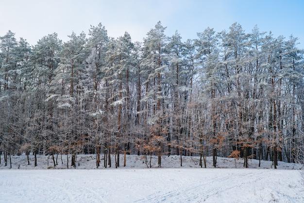 Bos in de vorst. winterlandschap. besneeuwde bomen.