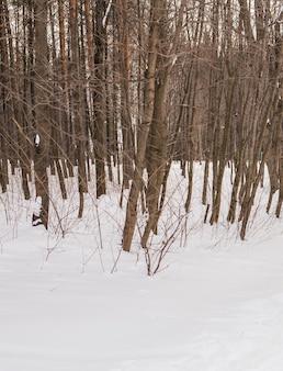 Bos in de winter met sneeuw