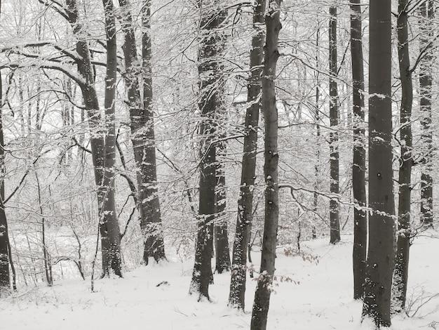 Bos in de winter