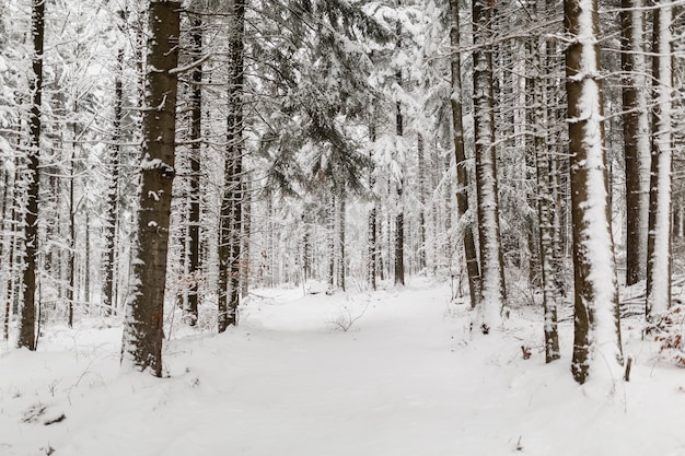 Bos in de winterdag
