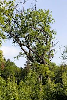 Bos in de zomer