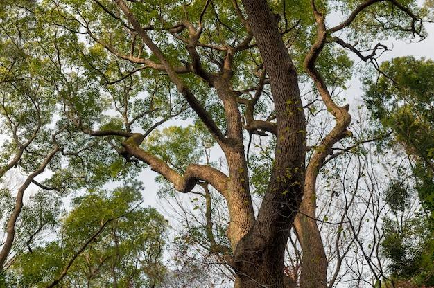 Bos met bomen close-up