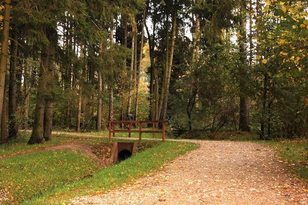 Bos met bomen en een houten balustrade