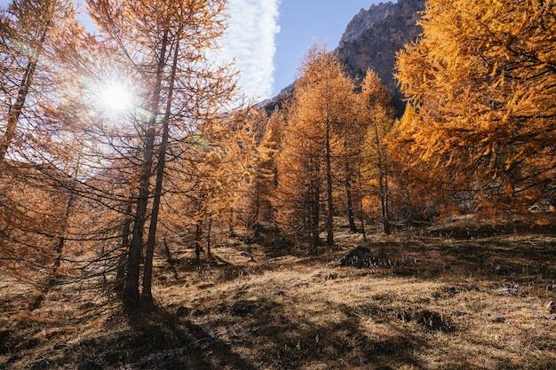 Bos met sinaasappelbomen in de herfst in de alpen van italië