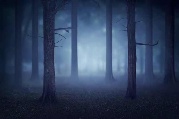 Bos met veel bomen en mist
