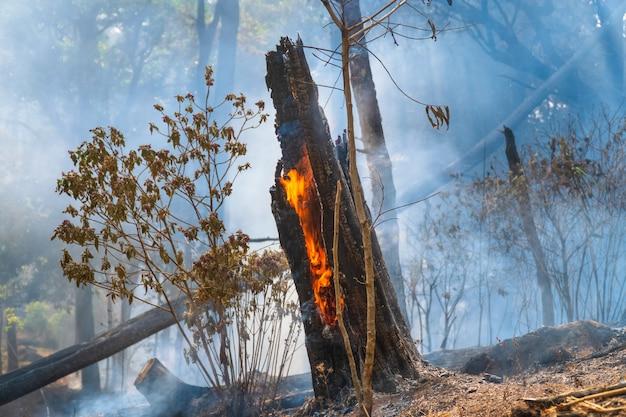 Bos na een brand. bomen die zwaar beschadigd zijn door brand
