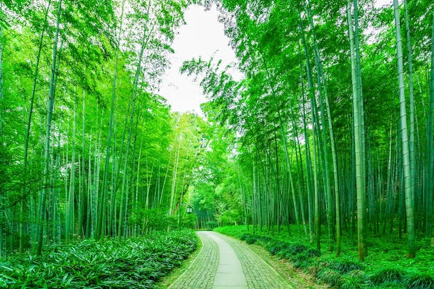 Bos natuur china groei dag