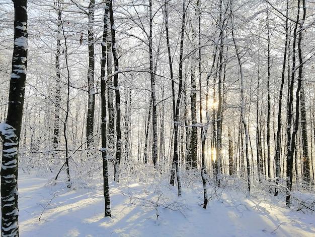 Bos omgeven door bomen bedekt met de sneeuw onder het zonlicht in larvik in noorwegen