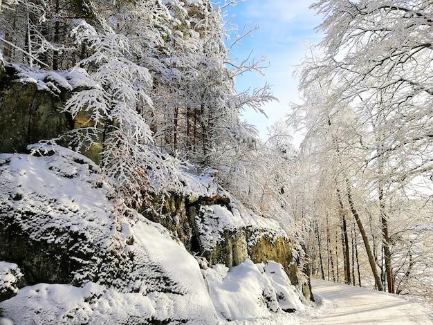 Bos omgeven door rotsen en bomen bedekt met de sneeuw onder het zonlicht in larvik in noorwegen