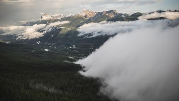 Bos onder bewolkte hemel