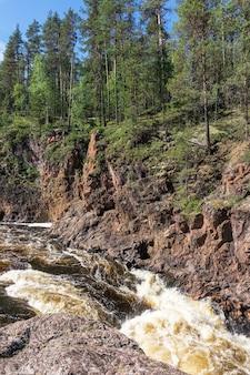 Bos op de rotsen in de canyon van de stormachtige rivier, finland. oulanka nationaal park