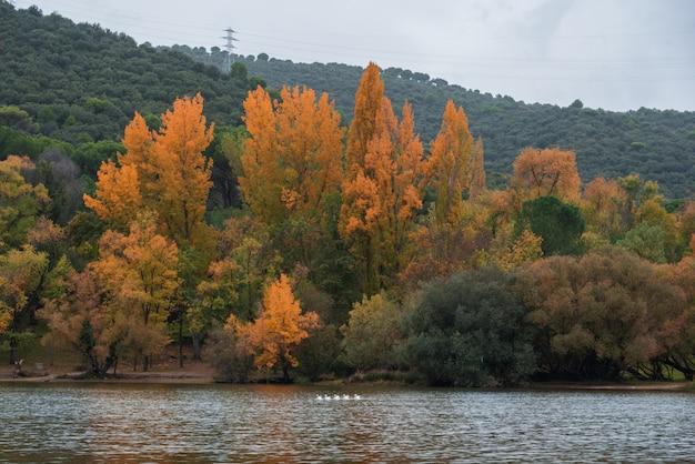 Bos op het water
