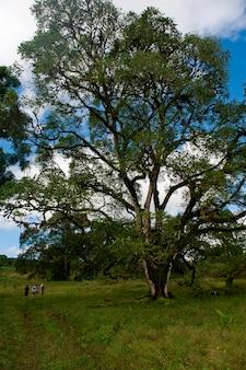 Bos, santa cruz-eiland, de galapagos eilanden, ecuador