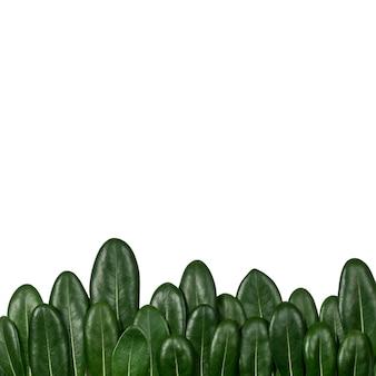 Bos treeline gemaakt van groene bladeren op lichte achtergrond
