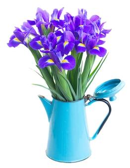 Bos van blauwe verse irissen in blauwe pot die op wit wordt geïsoleerd