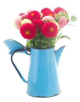 Bos van dahlia bloemen in blauwe pot geïsoleerd
