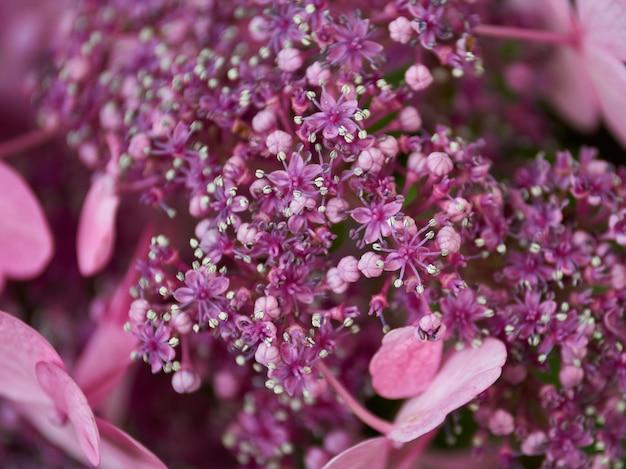 Bos van de roze bloem