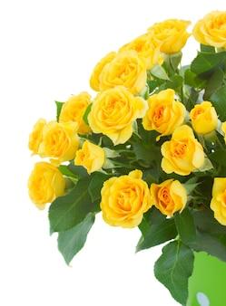 Bos van gele rozen close-up geïsoleerd op wit