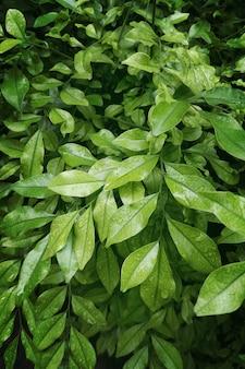 Bos van groene natuurlijke bladerenachtergrond