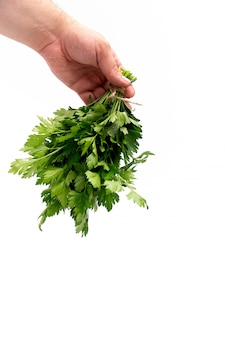 Bos van groene peterseliebladeren in een man hand op wit