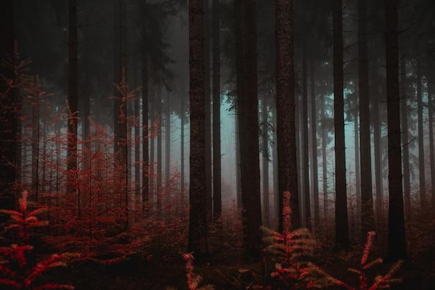 Bos van hoge bomen in de herfst