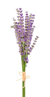 Bos van lavendelbloemen die op wit worden geïsoleerd