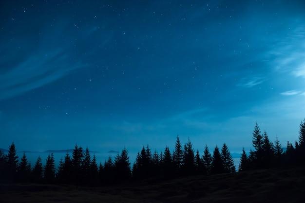 Bos van pijnbomen onder maan en blauwe donkere nachthemel met veel sterren