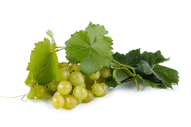 Bos van rijpe sappige verse groene druiven