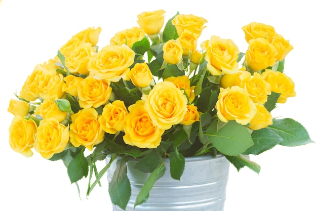 Bos van verse gele rozen met groene bladeren in metalen pot close-up geïsoleerd op wit
