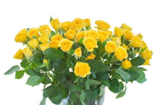 Bos van verse gele rozen op wit wordt geïsoleerd