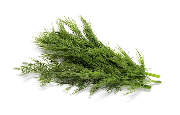 Bos van verse groene dille geïsoleerd op een witte achtergrond.