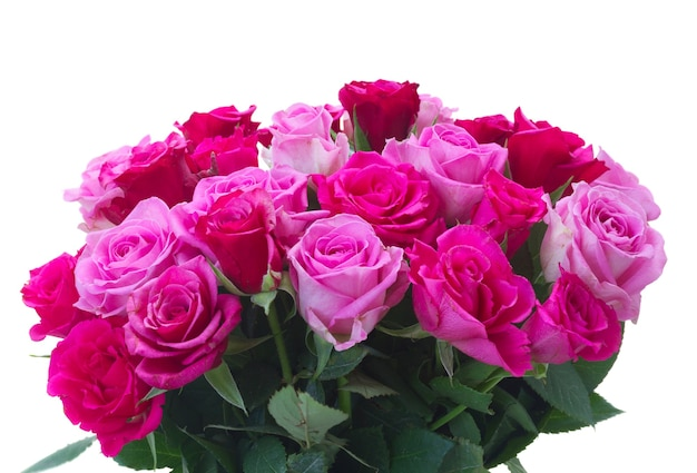 Bos van verse roze en magenta rozenclose-up die op witte achtergrond wordt geïsoleerd