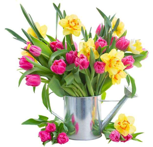 Bos van verse roze tulp bloemen en gele narcissen in gieter geïsoleerd op een witte achtergrond