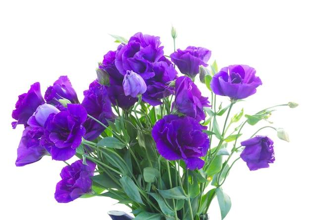 Bos van verse violette eustomabloemen die op wit worden geïsoleerd