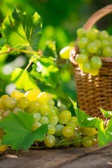 Bos van witte druiven in mand buiten