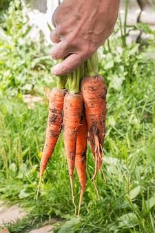 Bos van wortelen in een hand met zacht oppervlak