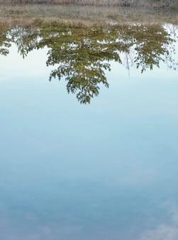 Bos weerspiegeld in water meer