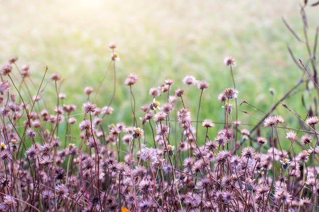 Bos weiland met wilde grassen, macro opname met kleine scherptediepte, achtergrond wazig