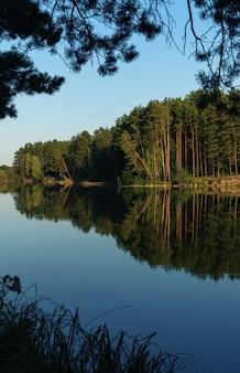 Bosbomenbezinning over meeroppervlakte in de oekraïne