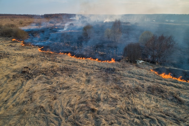 Bosbrand. droog gras brandt in het veld, vlakbij de rivier. natuurramp, brandstichting.