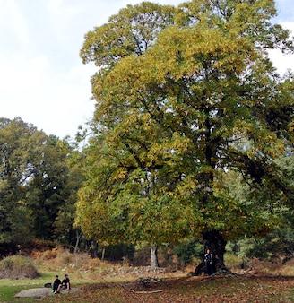 Boscastar in de herfst