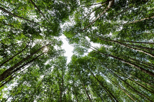 Bosgroei bomen natuur groene mangrove bos achtergronden ant eye view.