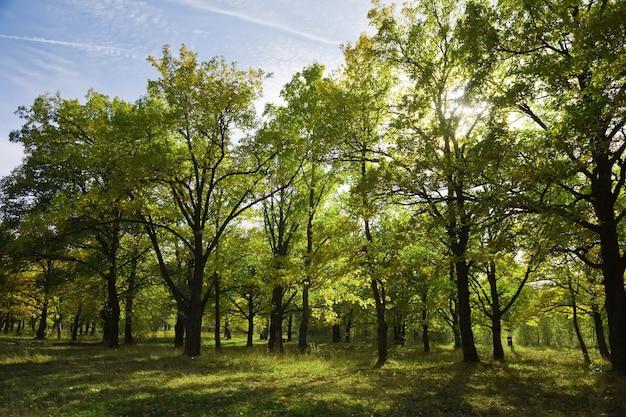 Bosje in de zomer