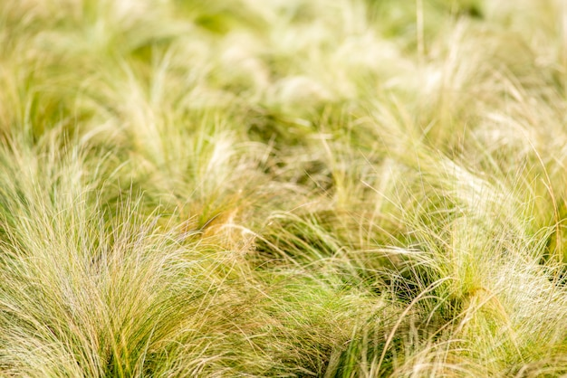 Bosjes van dunne grasachtergrond