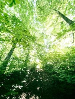 Boslandschap groen ruim bos