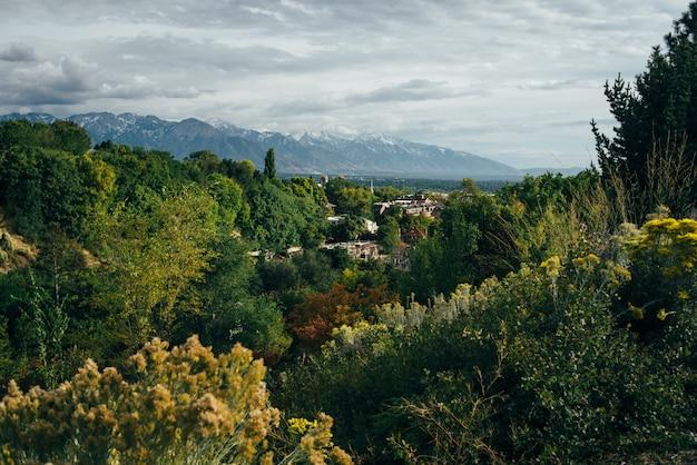 Boslandschap met bergen