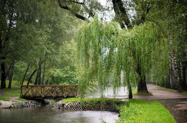 Boslandschap met een wilg in de regen