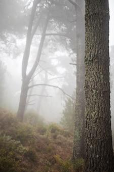 Boslandschap met lange oude boom